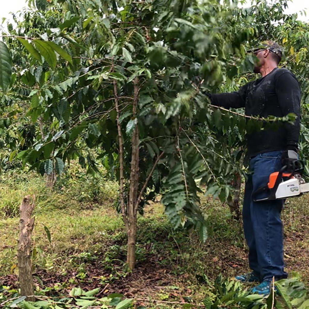コーヒーにも旬がある<br>ハワイ島カウ地区<br>ラスティズ農園の場合