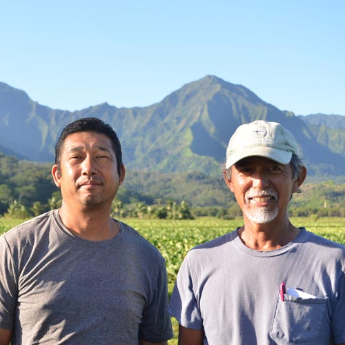 お米とタロイモと<br>日系農家がつなぐ <br>ハワイの文化と日本の心