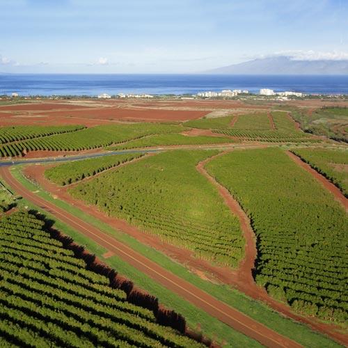 ハワイ産コーヒーの<br>味の違いとは?<br>島ごとにご紹介~後編
