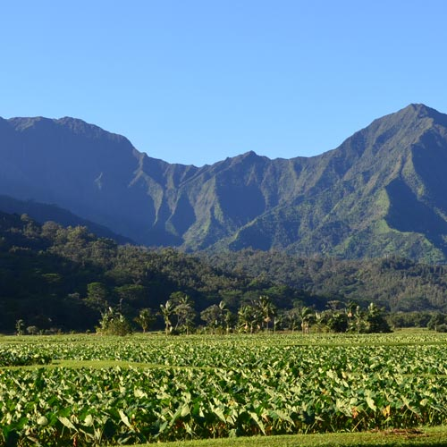ハワイにおける<br>オーガニック栽培と<br>ファーマーの本音