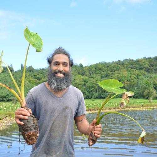 口下手な彼の農家転身<br>カウアイ島ハナレイで<br>タロイモと暮らす