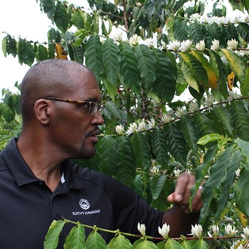 『COFFE REVIEW』<br>8月レポートで高得点!<br>ラスティズハワイアン